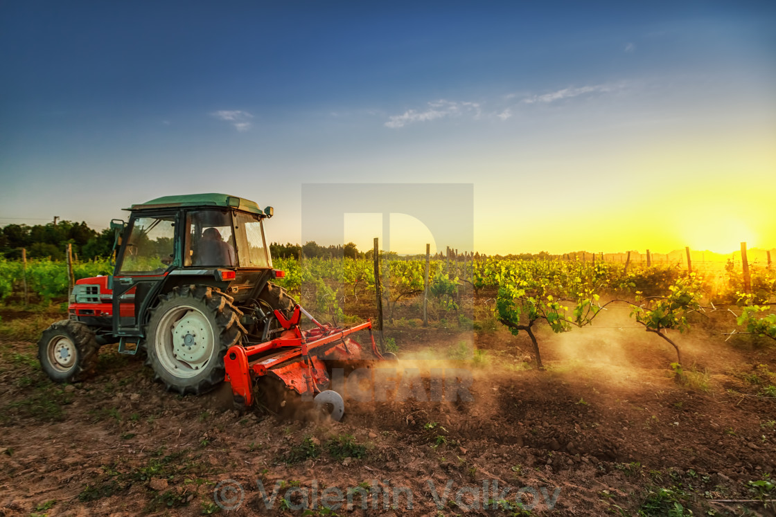"""Tractor in the vineyard at sunset"" stock image"