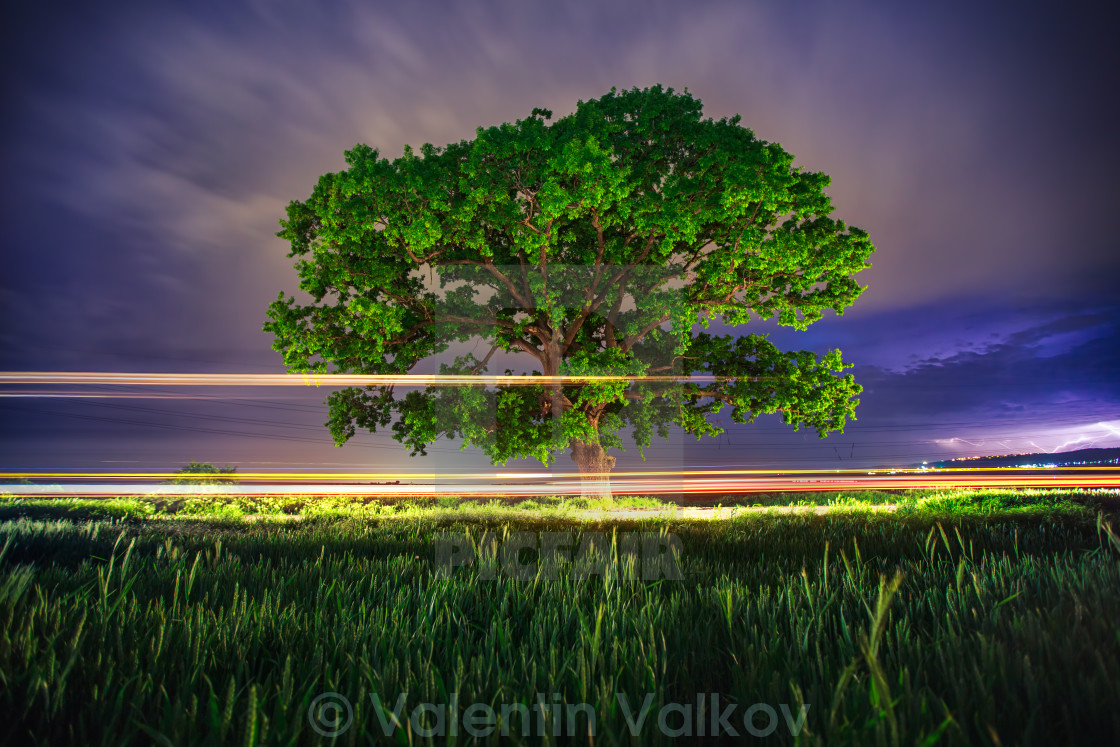 """Big green tree at night"" stock image"