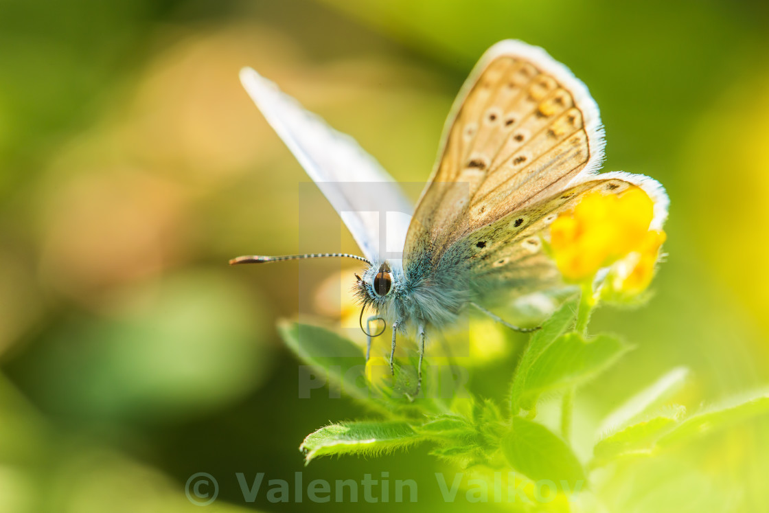 """Fresh morning dew on a spring grass and butterfly, natural backg"" stock image"