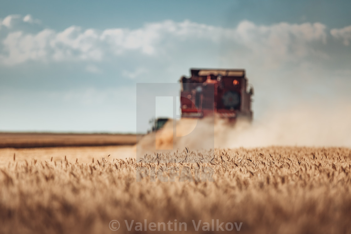 """Combine harvester agriculture machine harvesting golden ripe whe"" stock image"