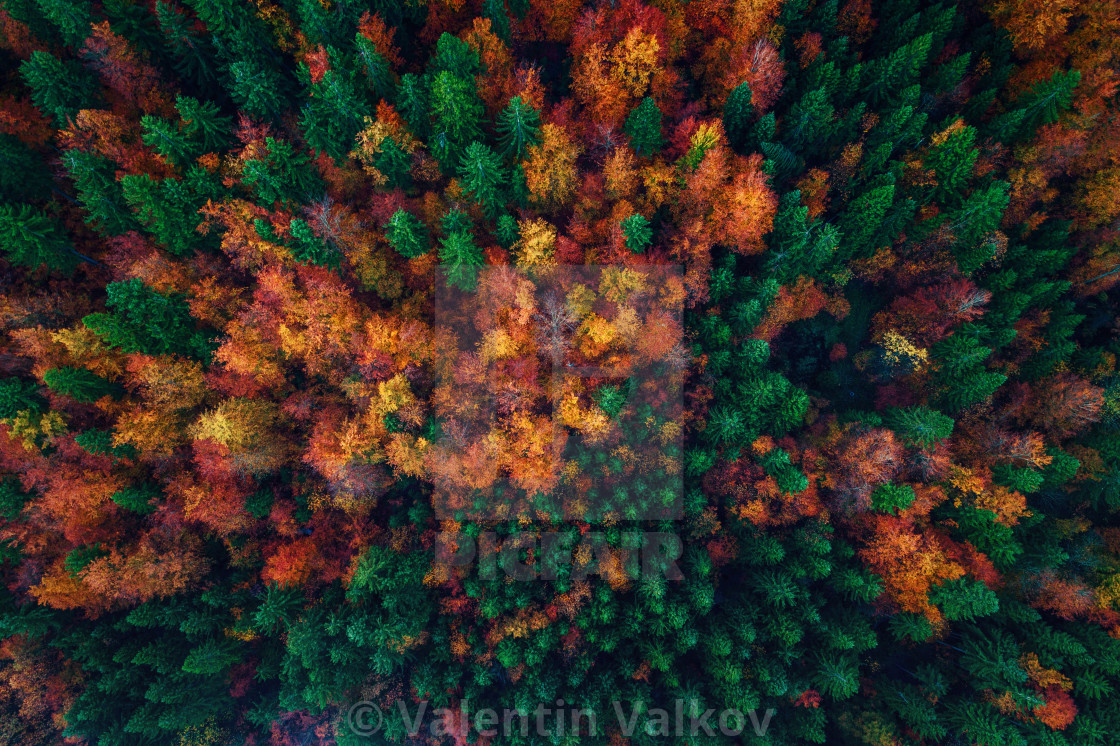 """Aerial view over autumn forest"" stock image"