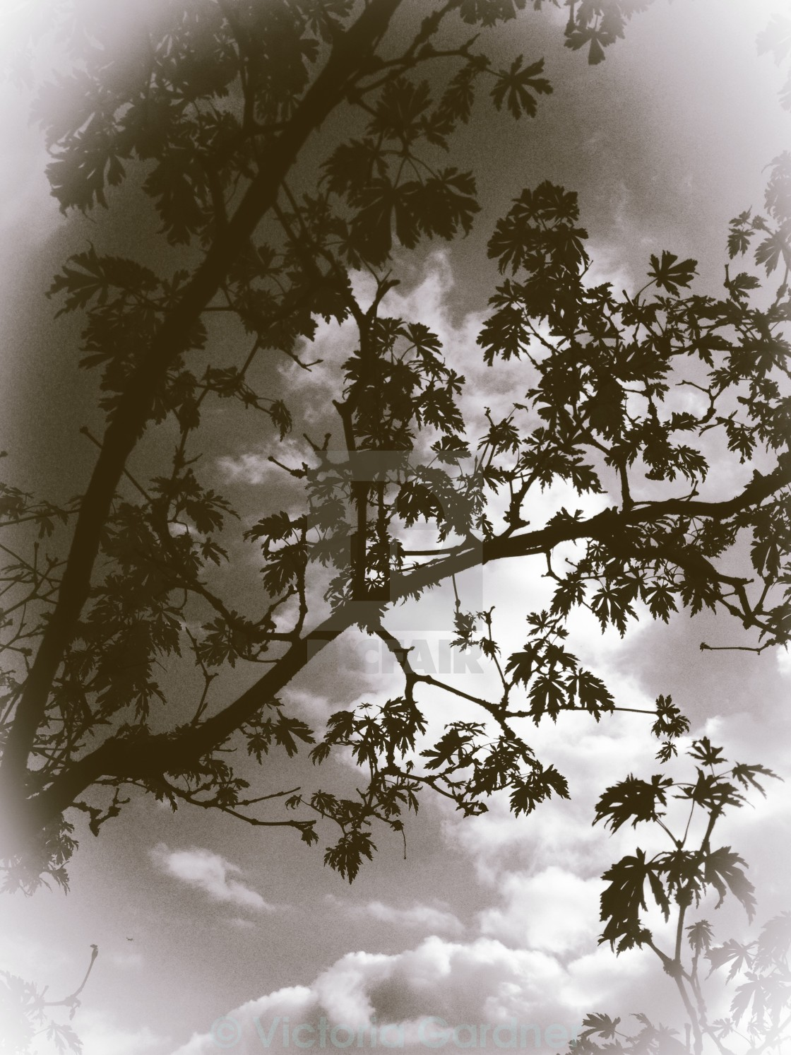 Tree branches against clouds