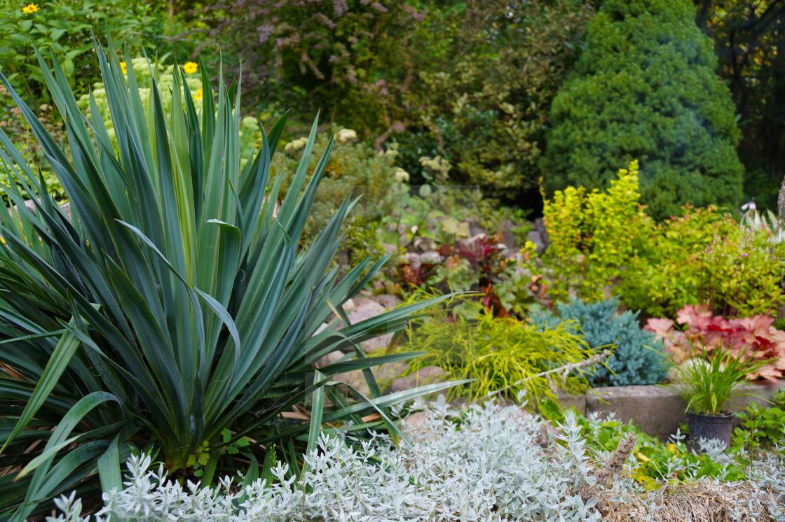 Captivating An Attractive Arrangement Of Plants In The Garden   License ...