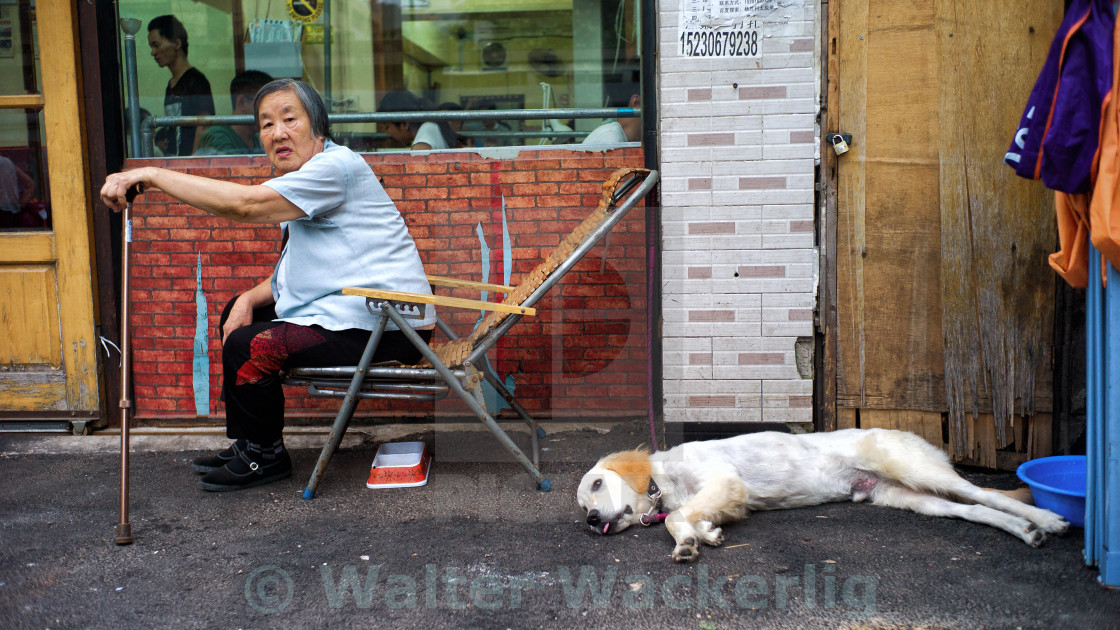 """Woman and dog"" stock image"