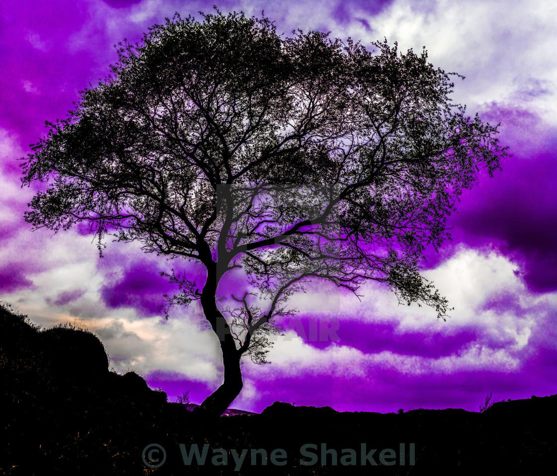 """""""Tree Silhouette"""" stock image"""