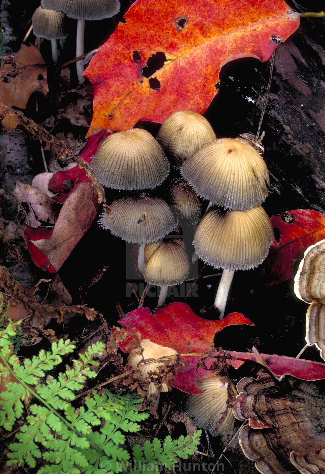 """""""Mushrooms and Fall Colors"""" stock image"""