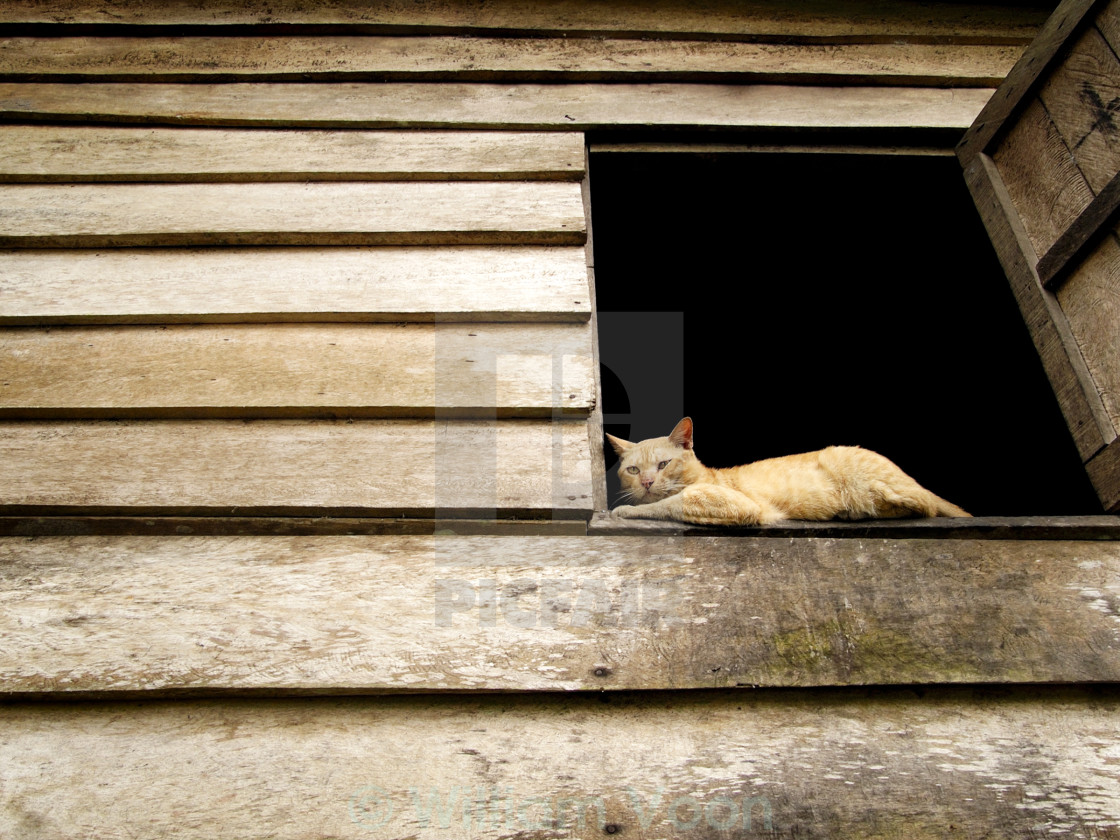"""Cat Sitting On Window Sill"" stock image"
