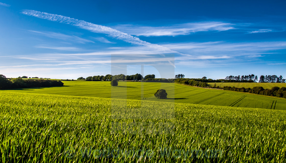 """Field & Sky"" stock image"