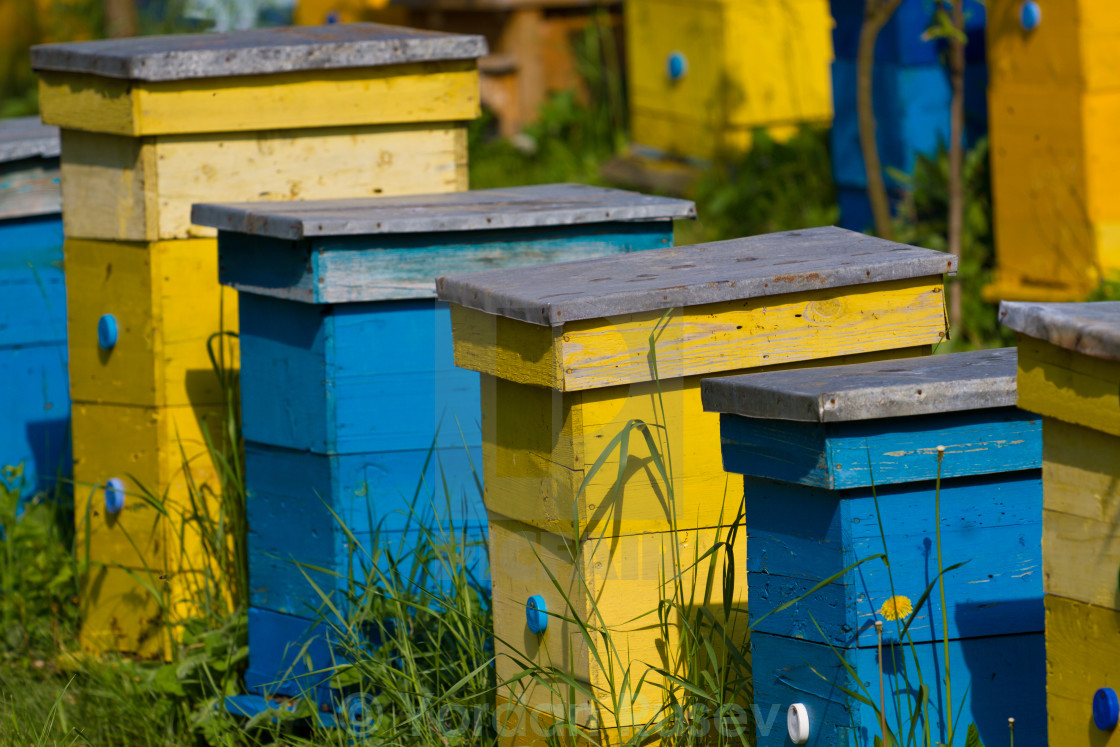 """""""Beehives"""" stock image"""