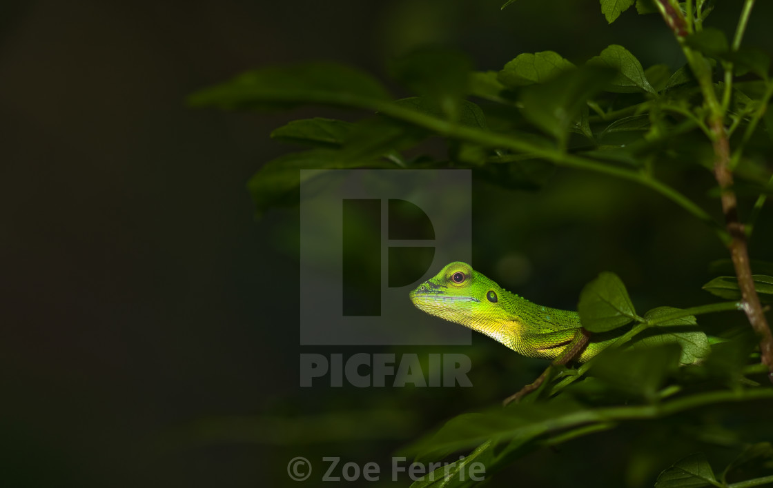 """Asian Water Dragon"" stock image"