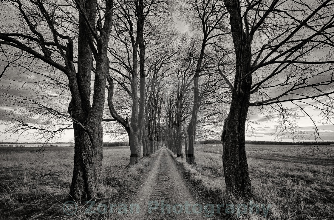 """Oak alley"" stock image"