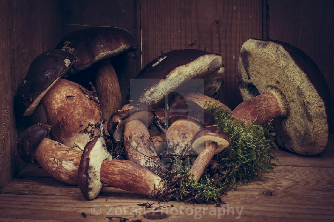 """Karl-Johan mushroom"" stock image"