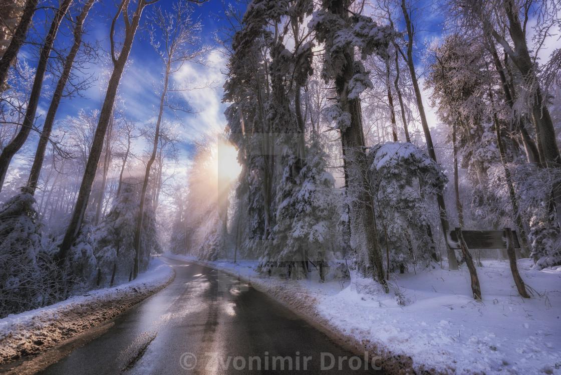 """Winter Sun Peaking trough Snowy Trees"" stock image"