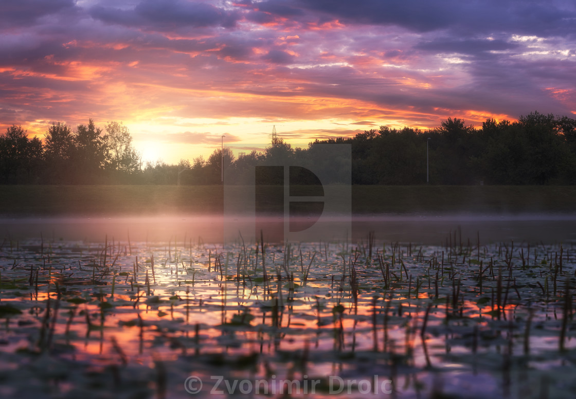 """Sunrise on the Lake covered with Water Lily's"" stock image"