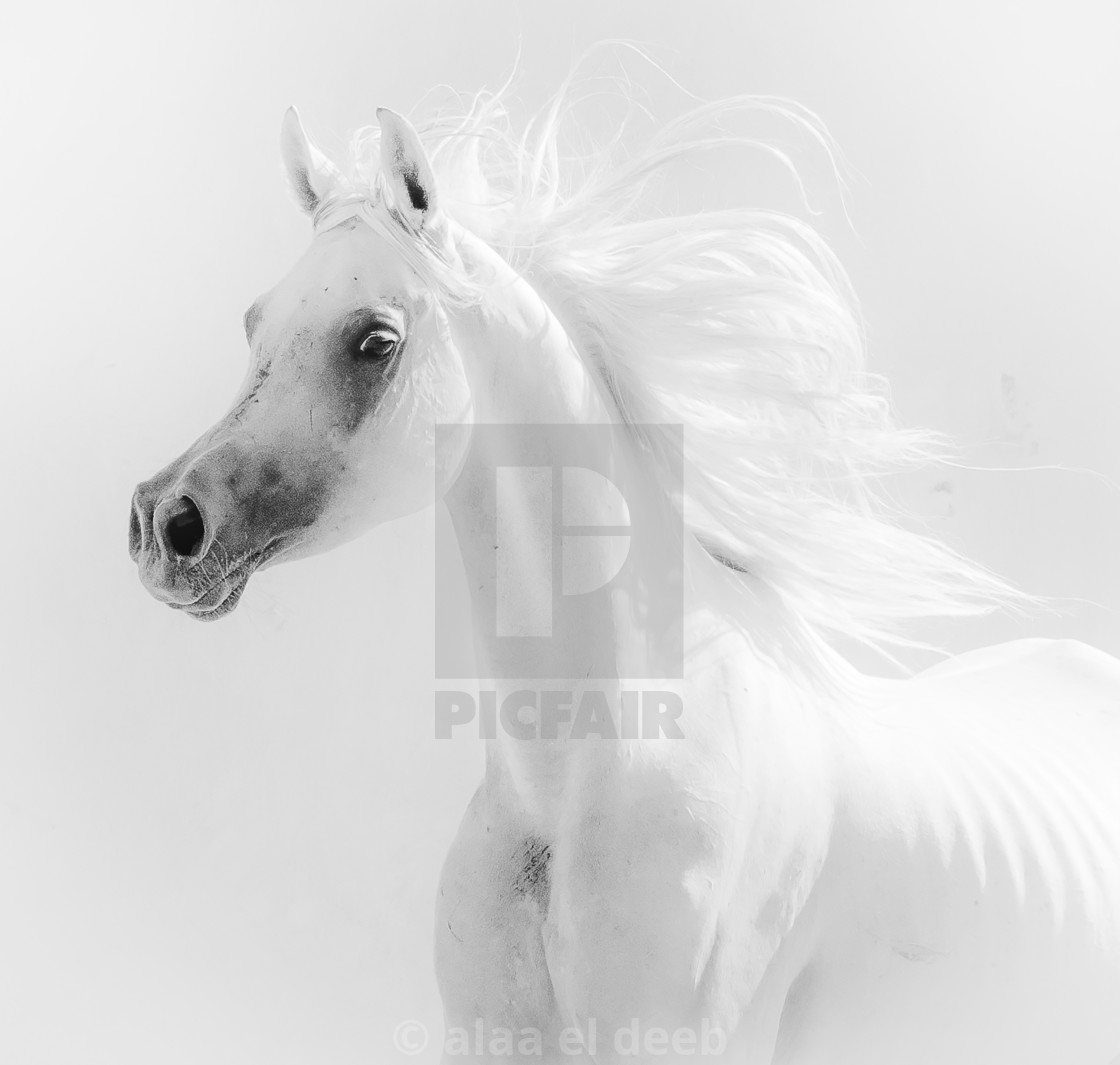 """Egyption Horse"" stock image"