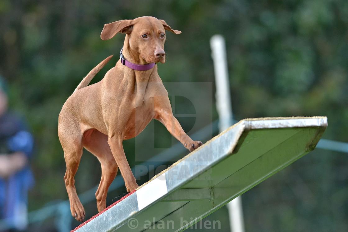 """""""dog agility 1"""" stock image"""