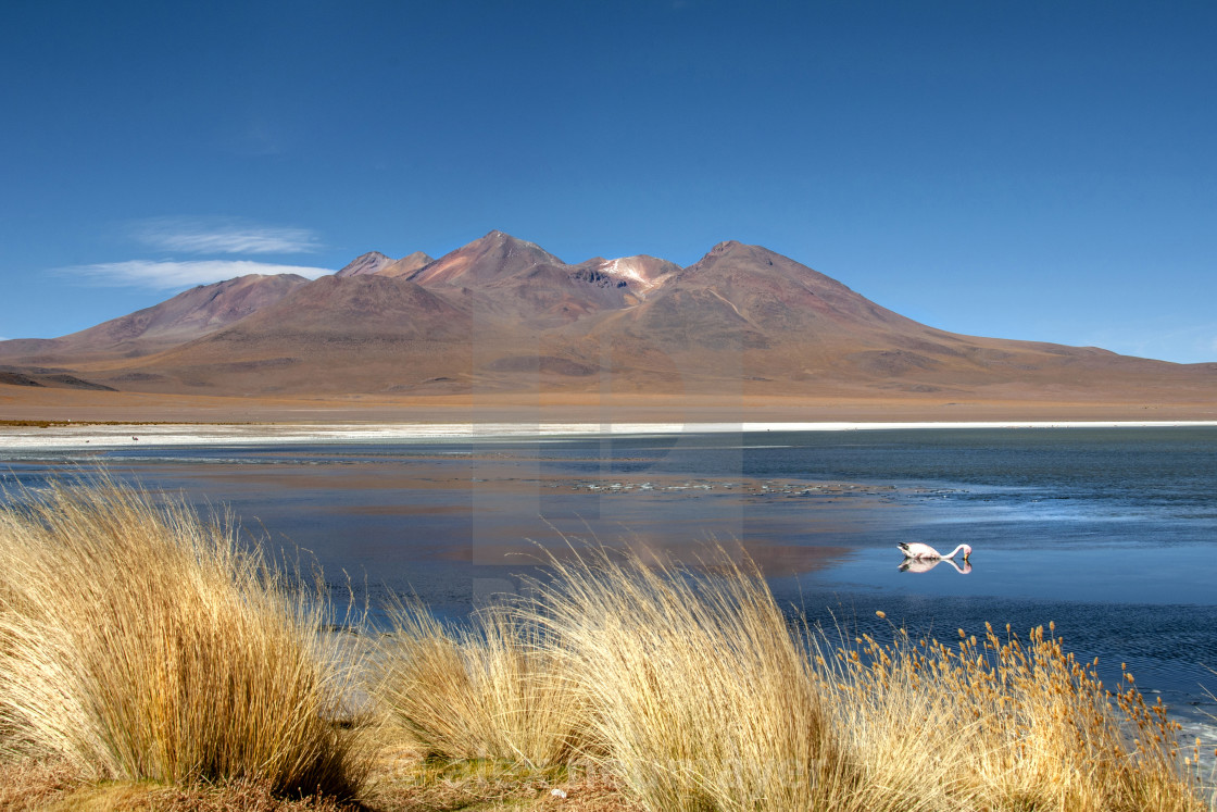 travelling the lagunas in bolivas andes mountains