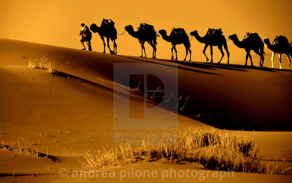 """dawn in the desert.."" stock image"