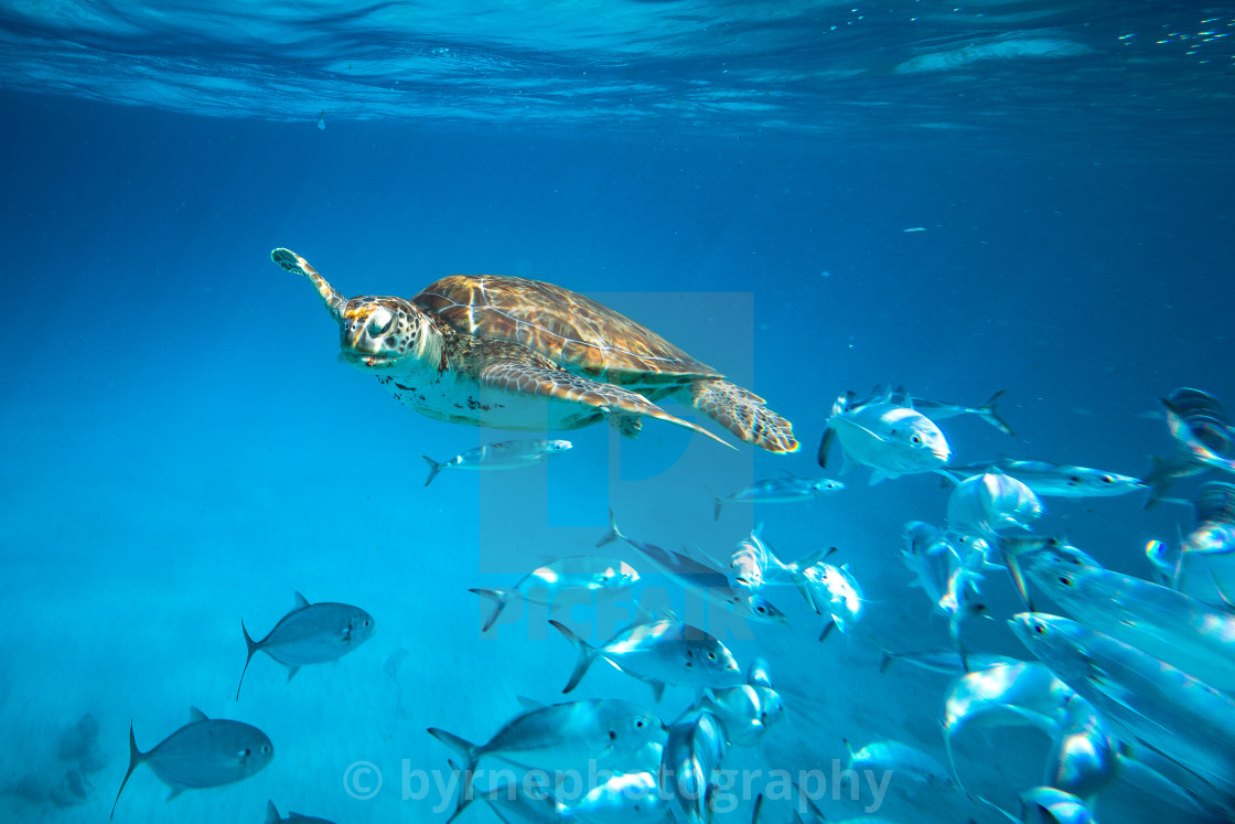 """Turtle Ocean."" stock image"