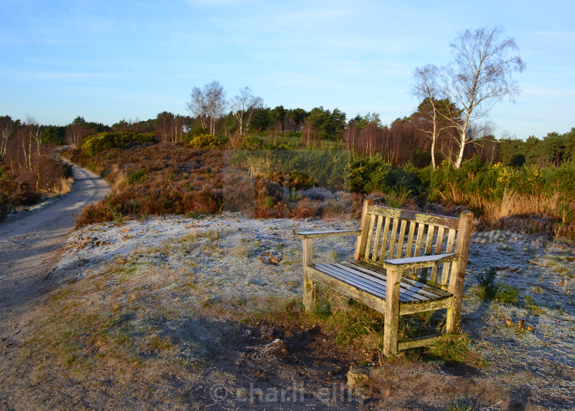 """""""Frosty Bench"""" stock image"""