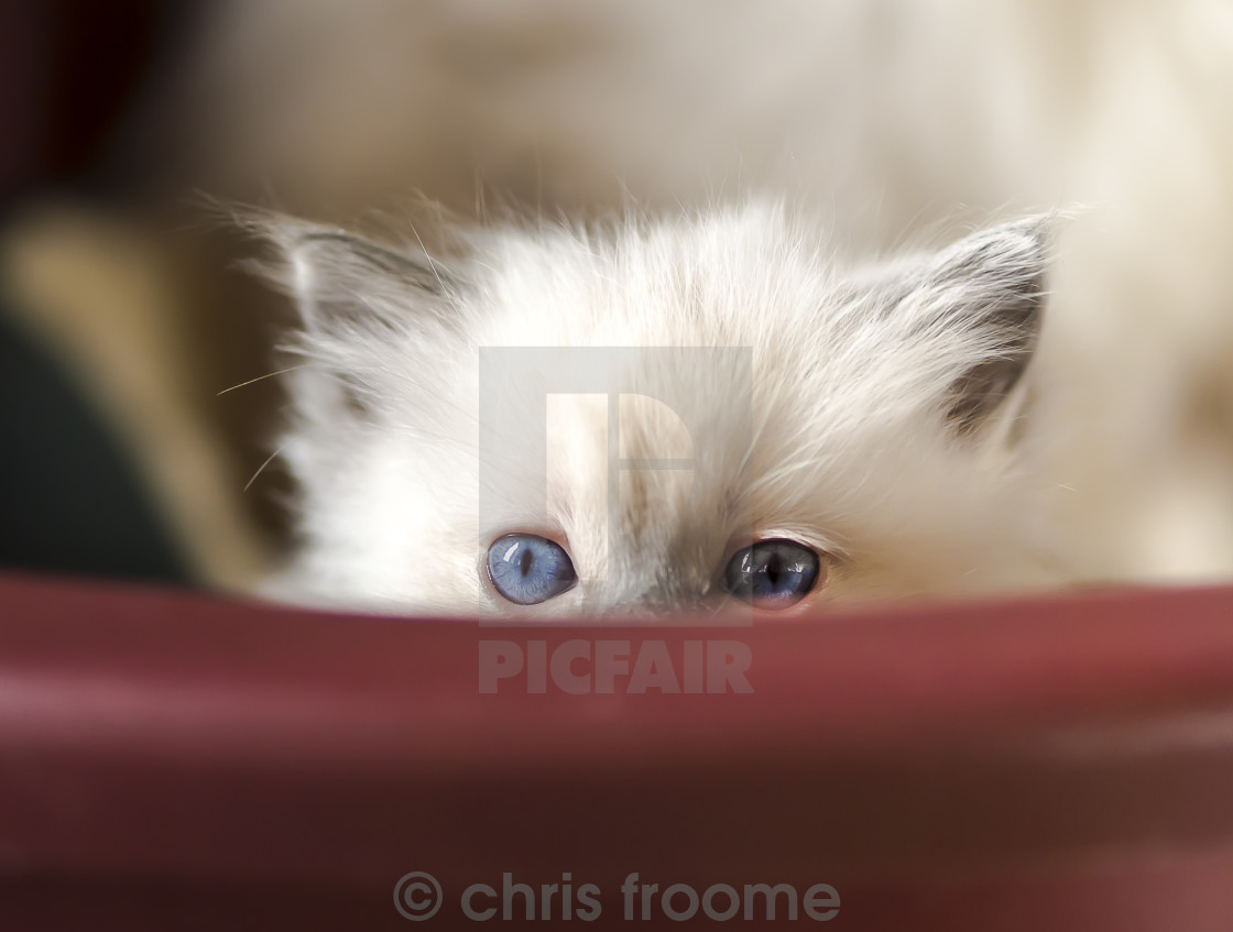 """peeking over the rim"" stock image"