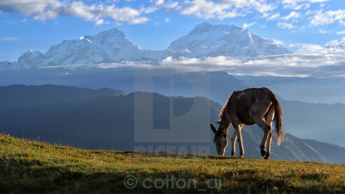 """Happy in Himalaya"" stock image"