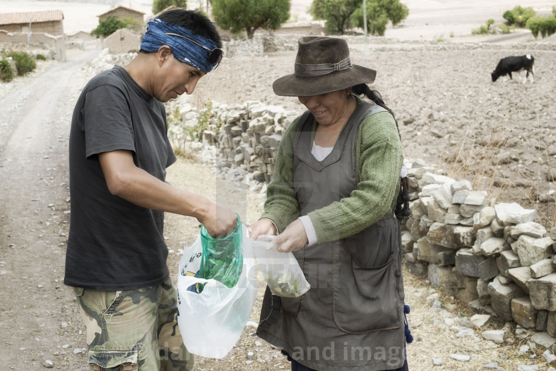 """""""Exchange of coca leaves is a daily greeting like shaking hands"""" stock image"""