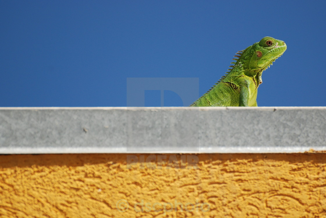 """Sunbathing"" stock image"