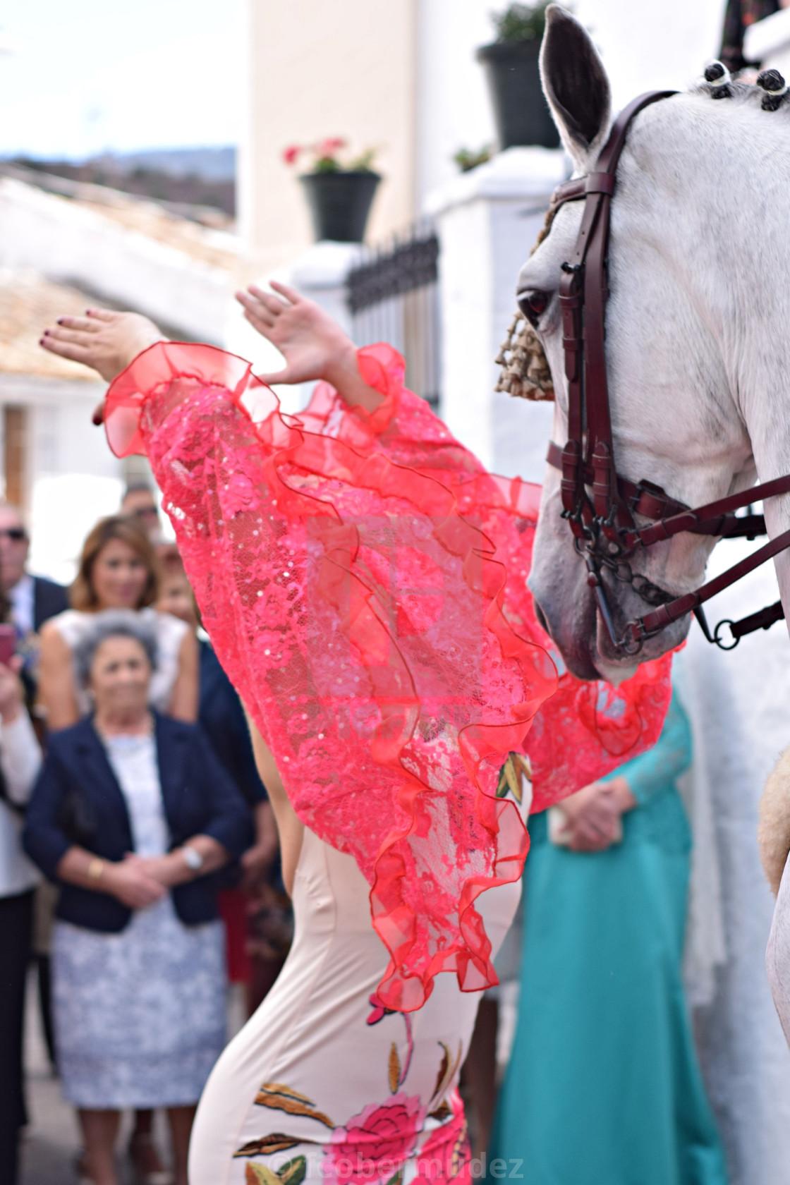 """""""Caballo andaluz bailando sevillanas"""" stock image"""