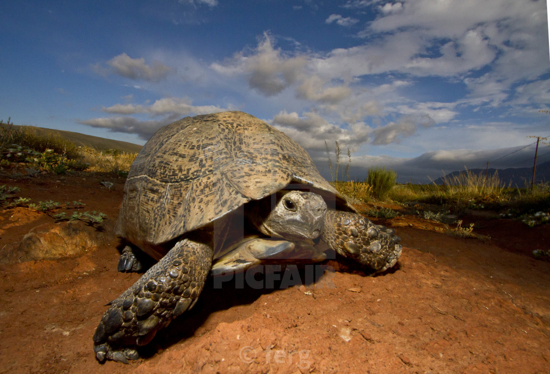 """Tortoise on the road again"" stock image"