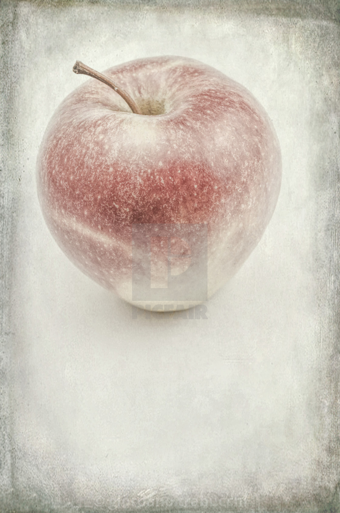 """apple still life"" stock image"