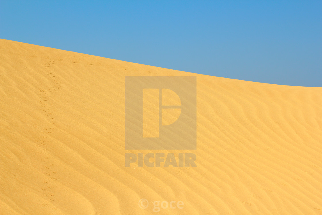 """sand dune with small animals tracks"" stock image"