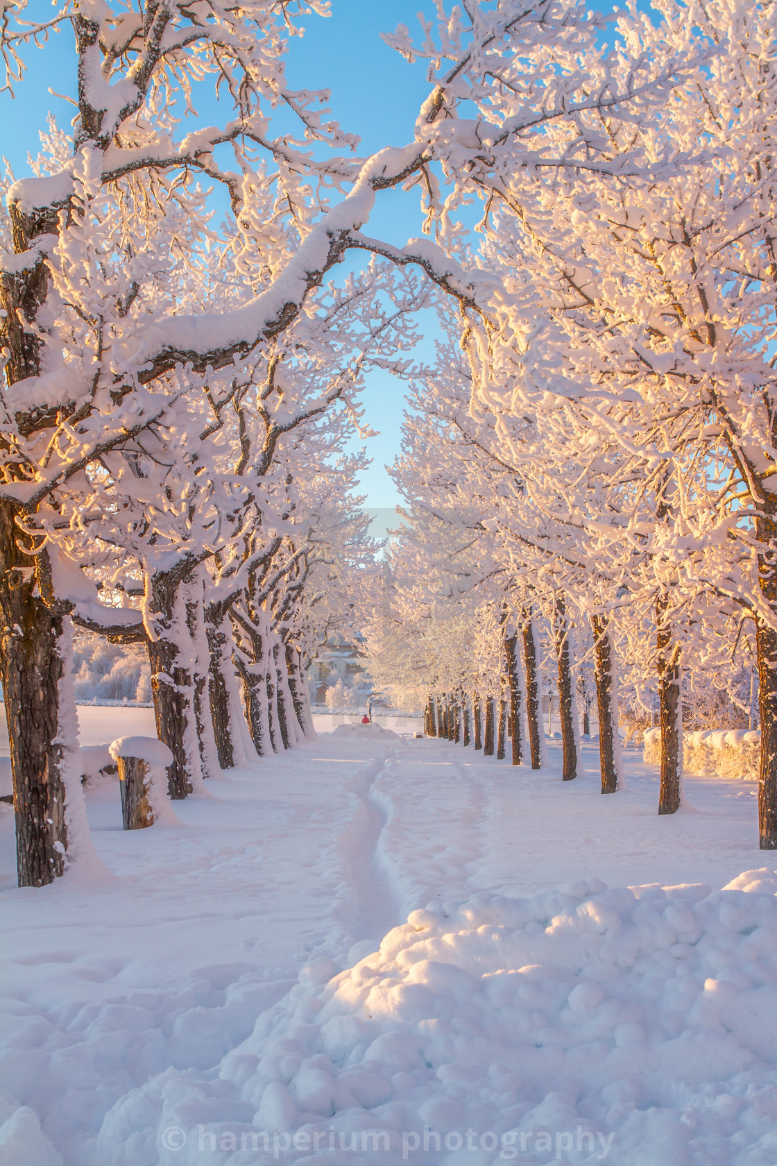 """Winter in Sweden"" stock image"