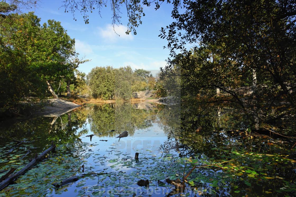 Franchard pond