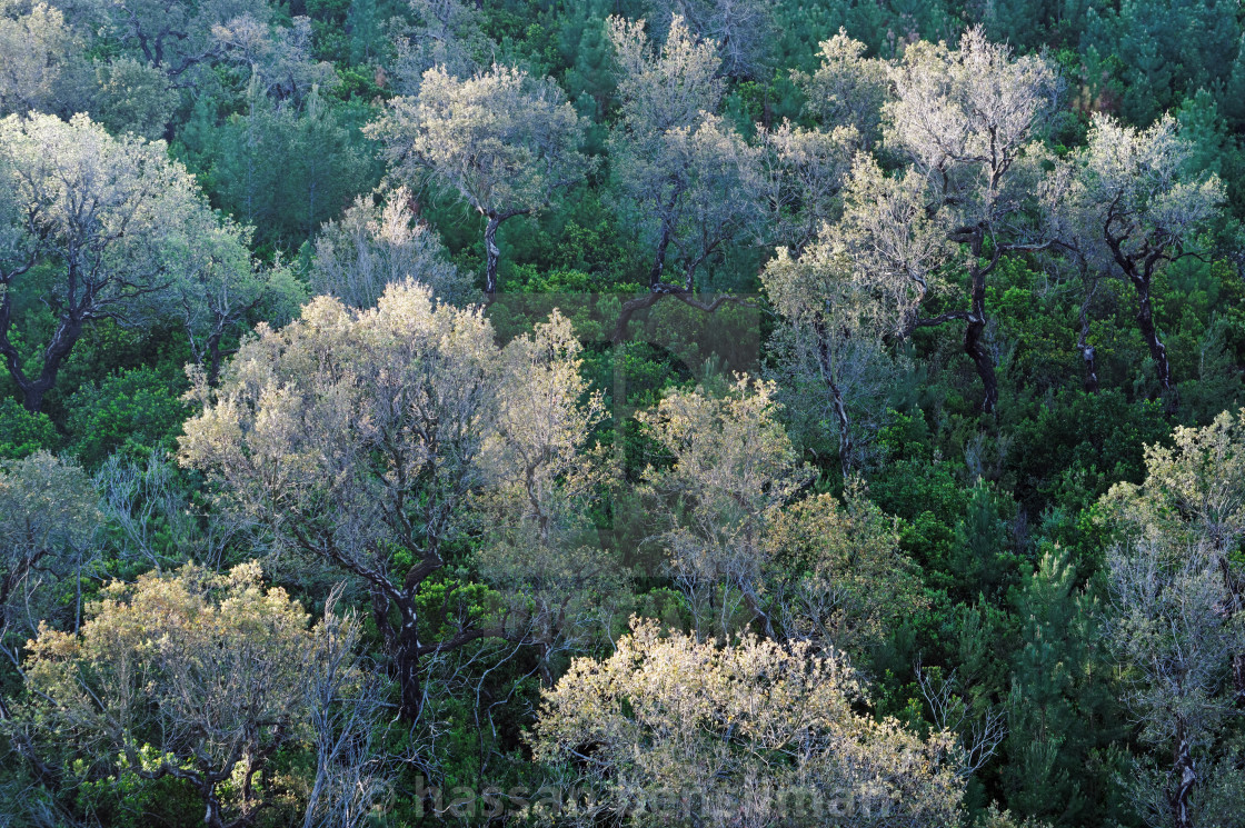 Colle Noire forest