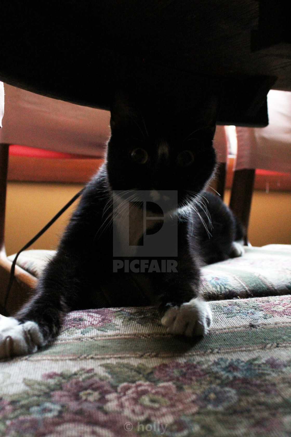 """""""cat under the table"""" stock image"""