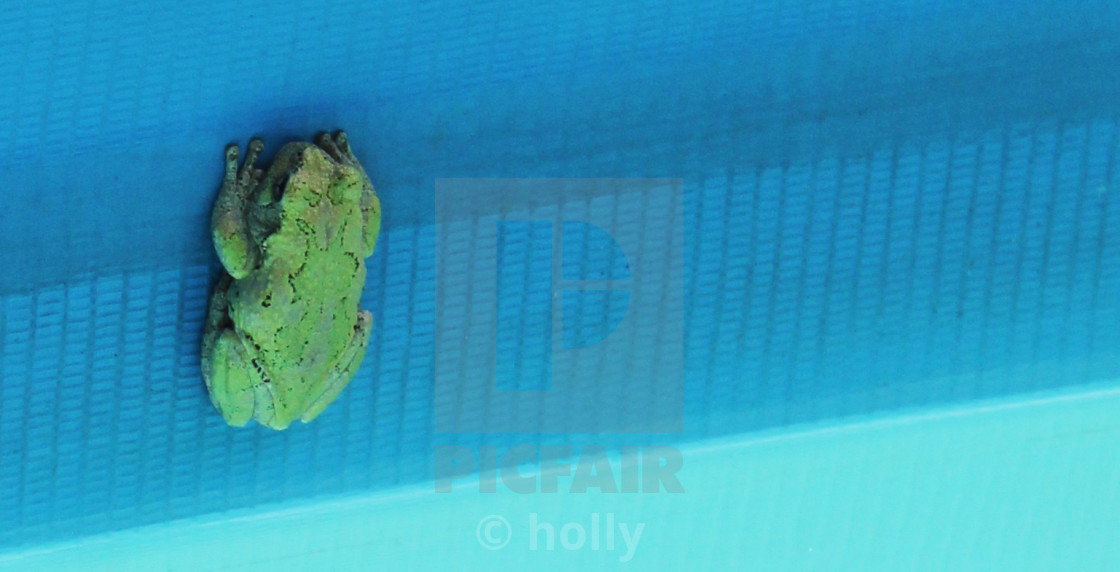green frog in pool