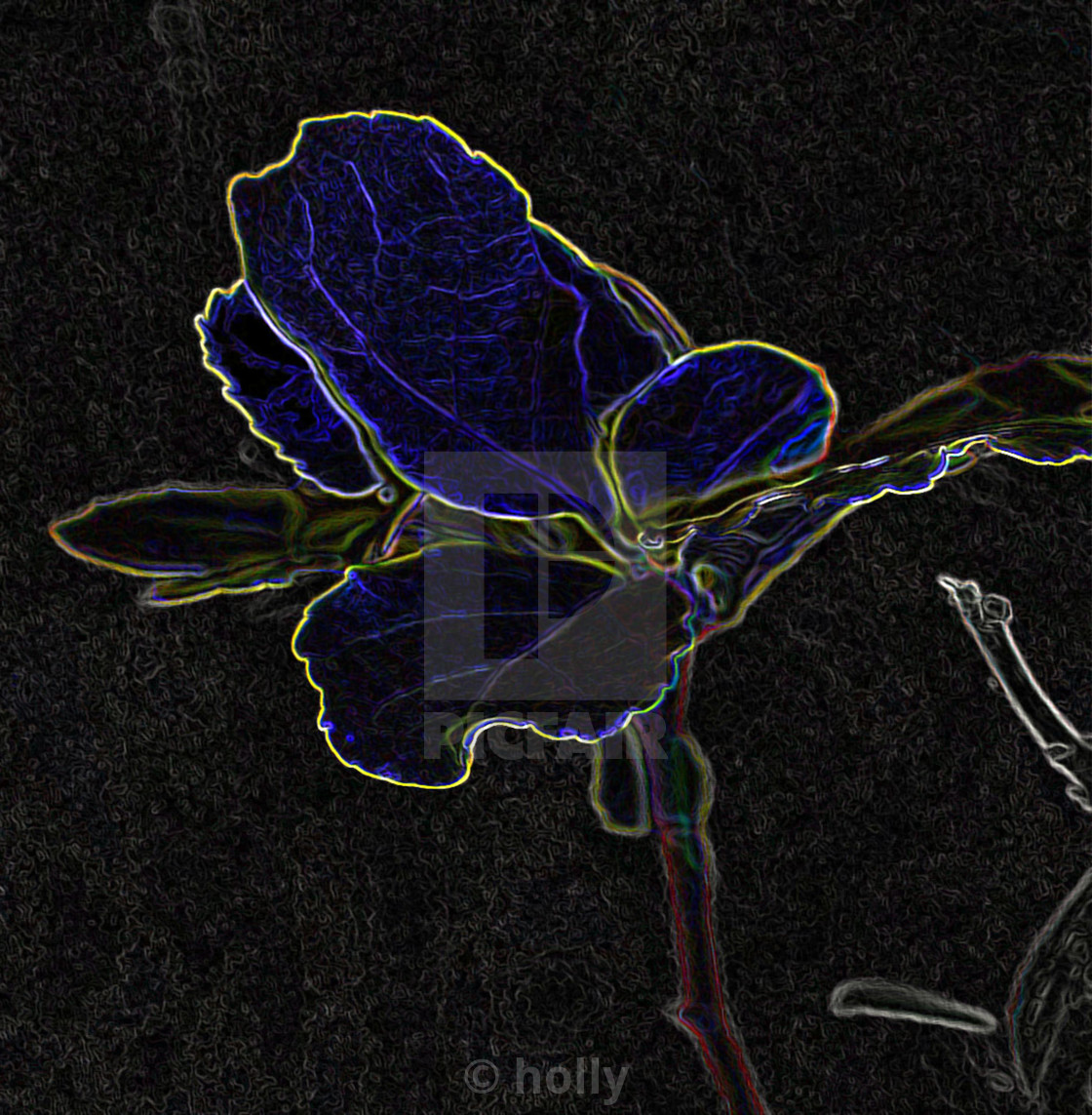 """""""abstract blue flower"""" stock image"""