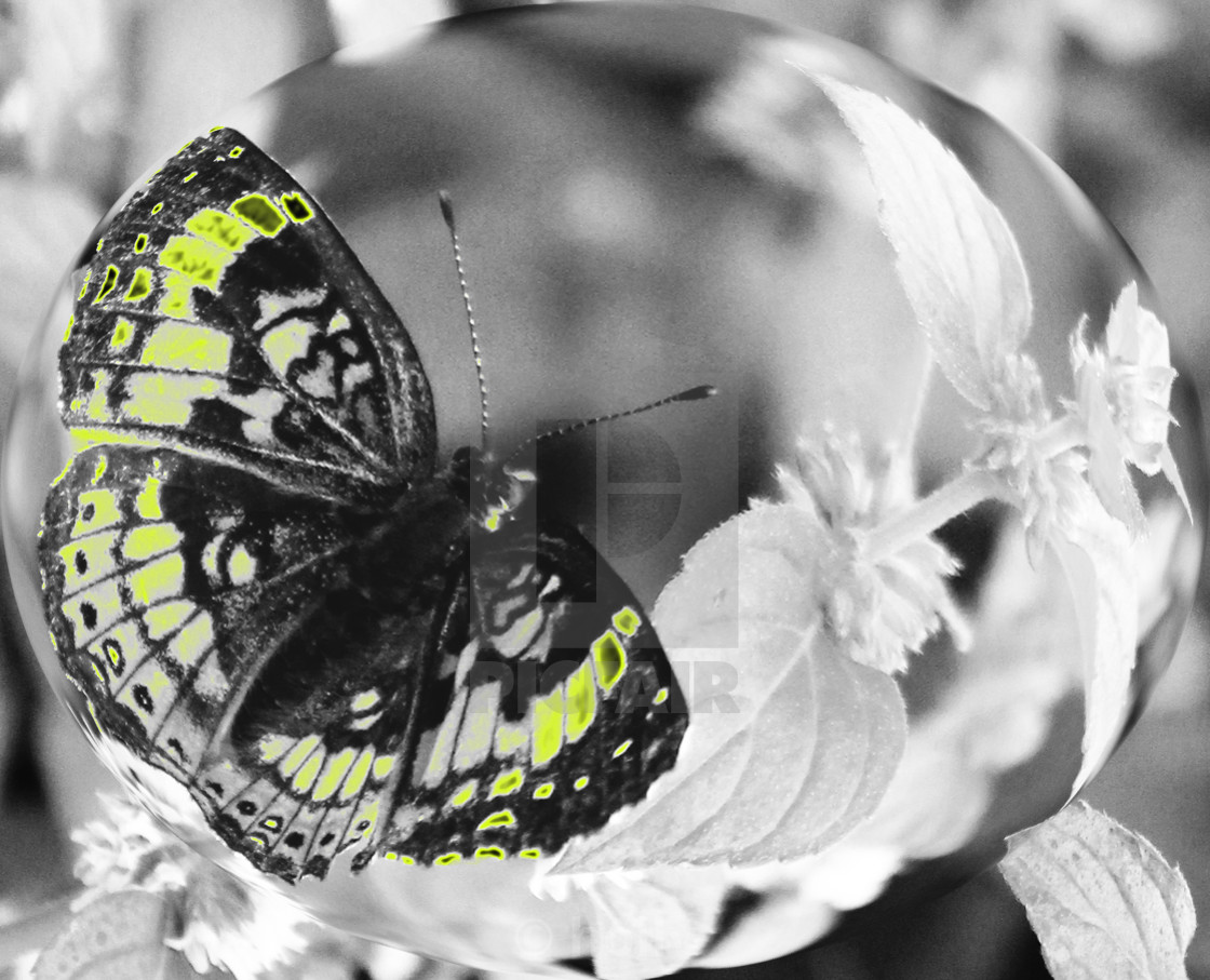"""""""crescent butterfly in a sphere"""" stock image"""