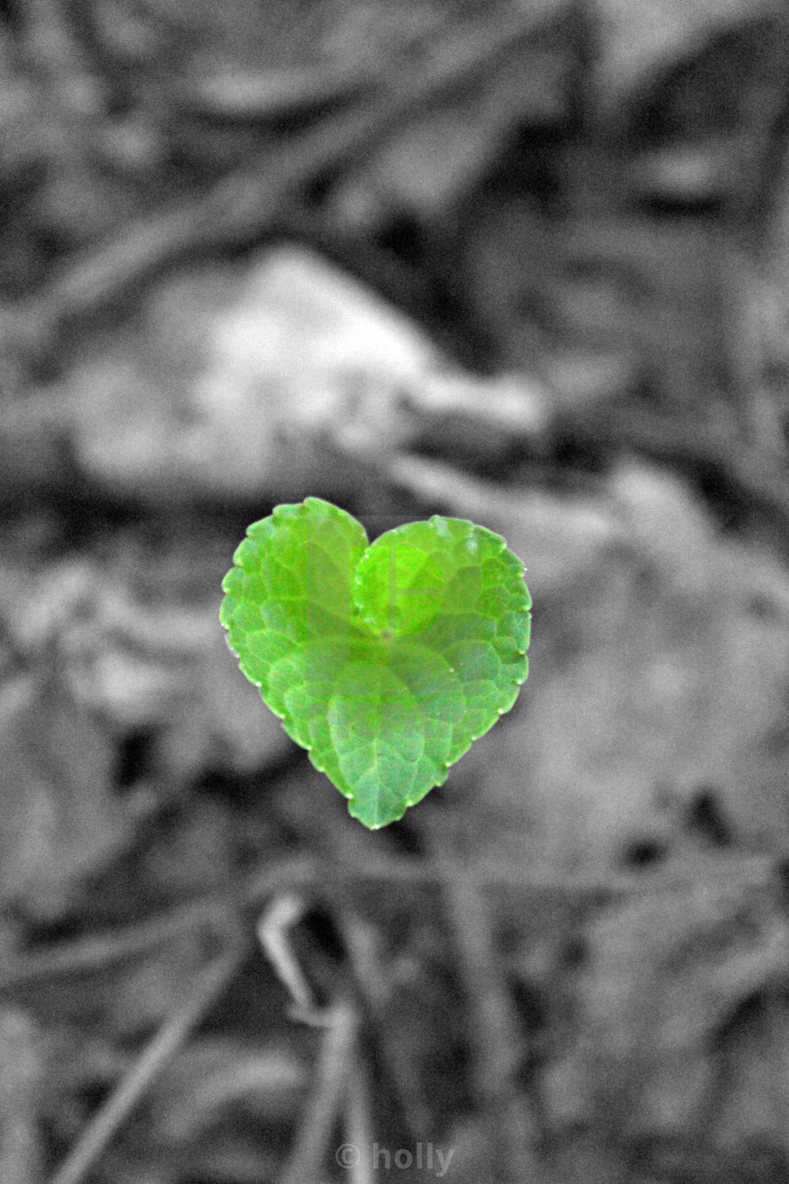 """""""a green heart for you"""" stock image"""
