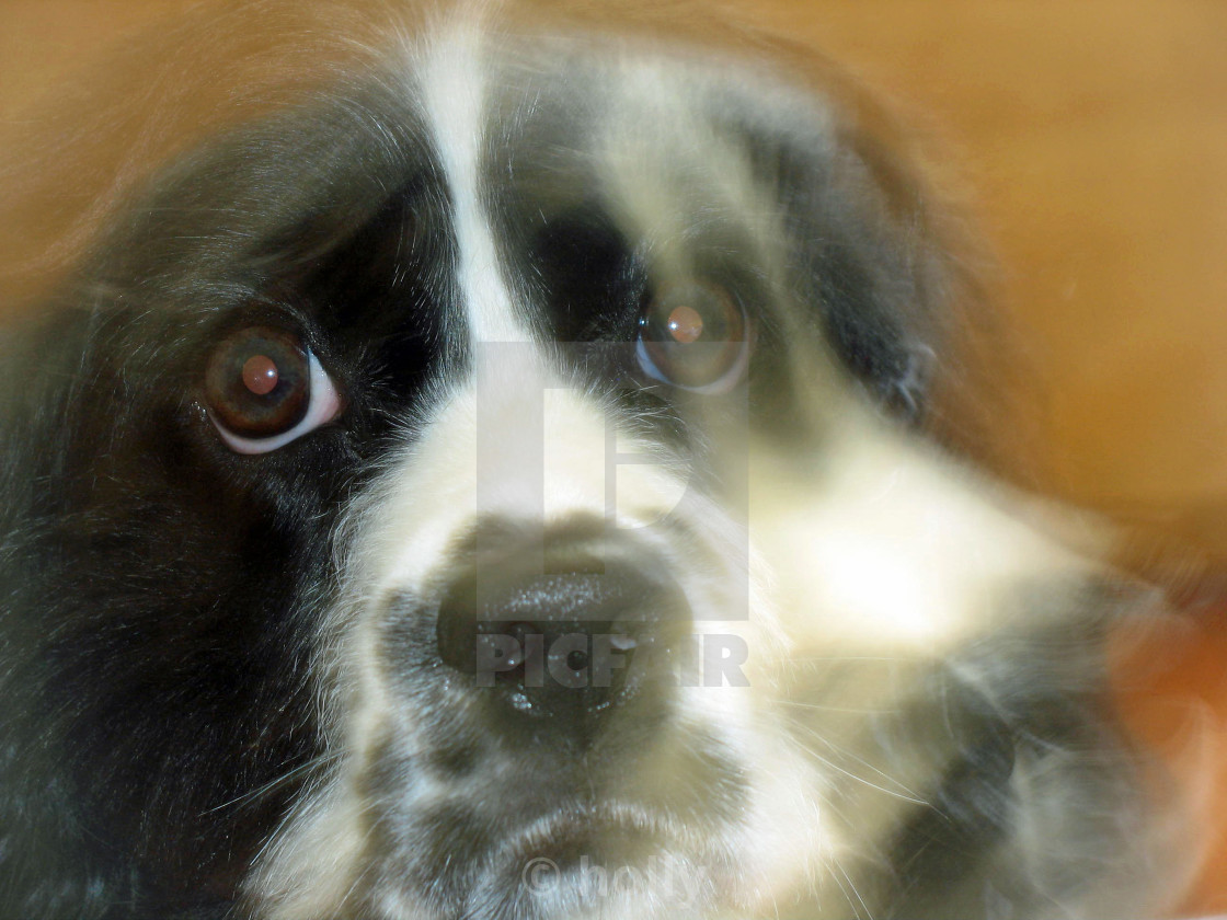 """""""ghost of a dog"""" stock image"""