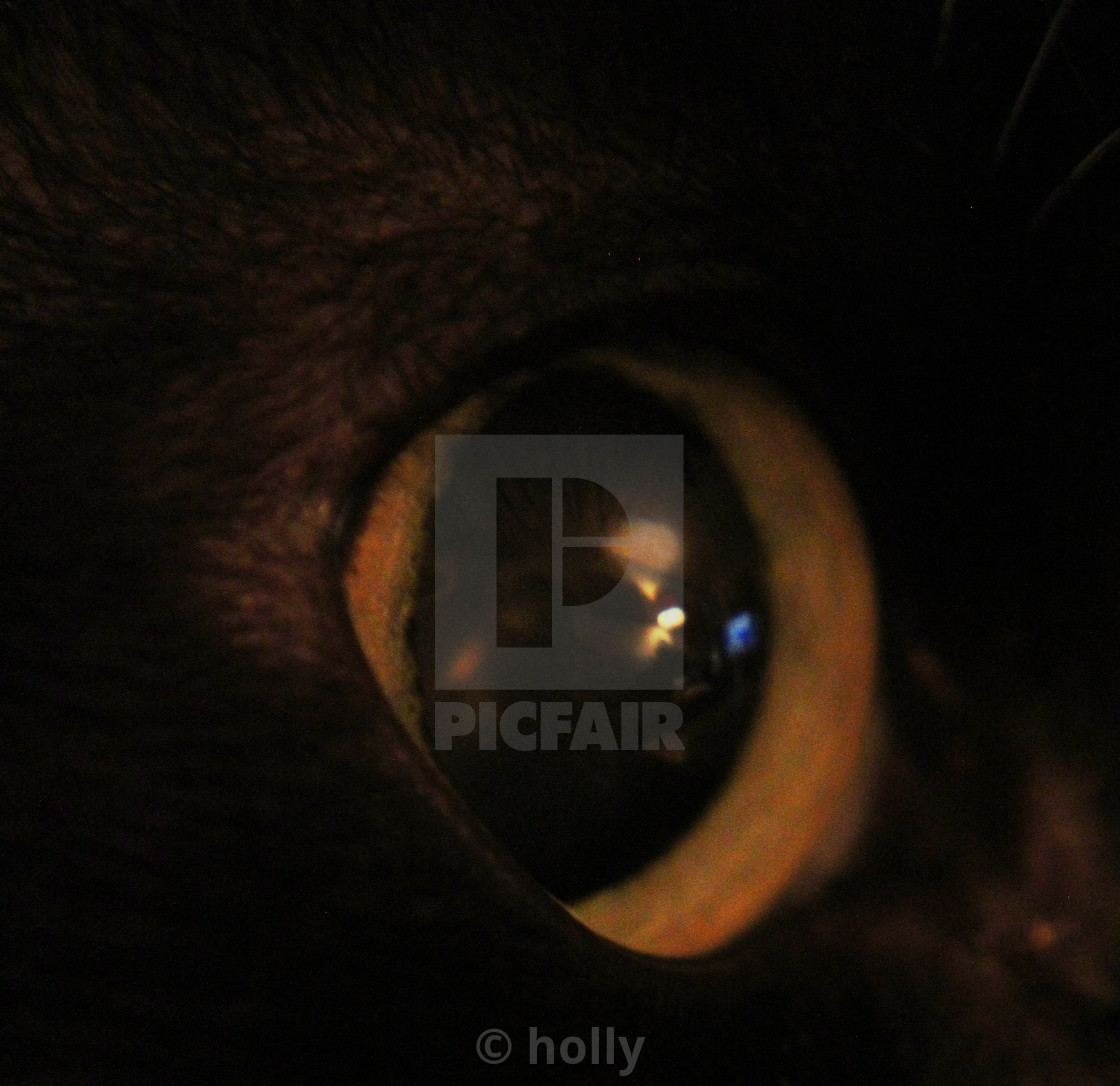 """cats eye reflection"" stock image"