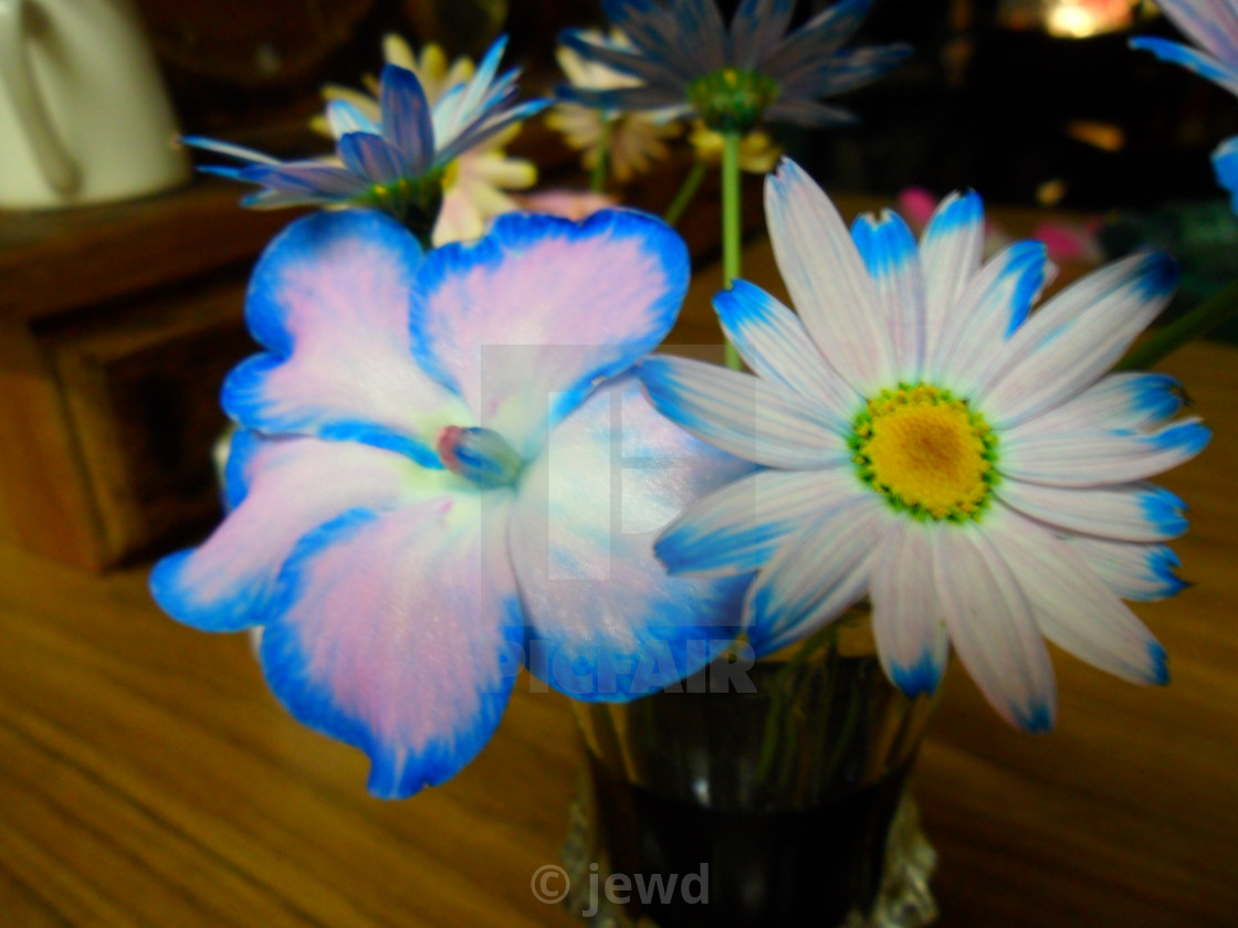 Dyed Flowers License Download Or Print For 12 40