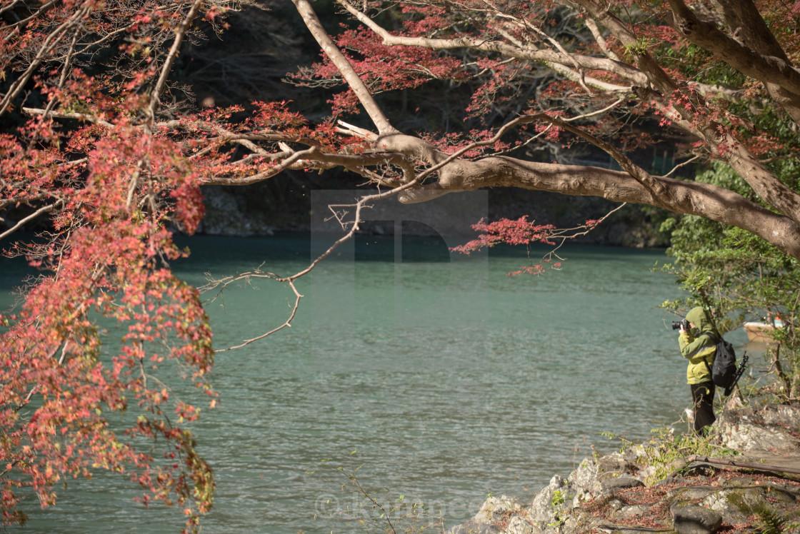 """""""Arashiyamas autumn colors. Arashiyama. Kyoto. Japan."""" stock image"""