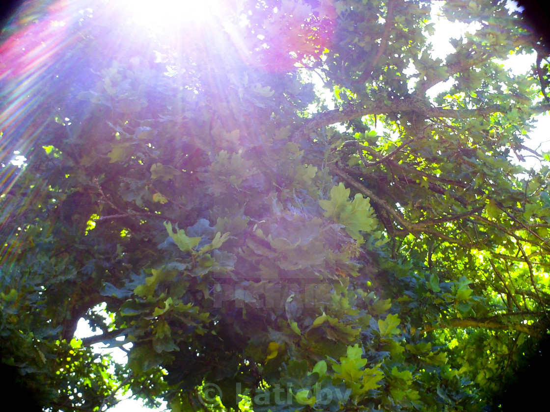 """""""Shining through the leafy branches"""" stock image"""