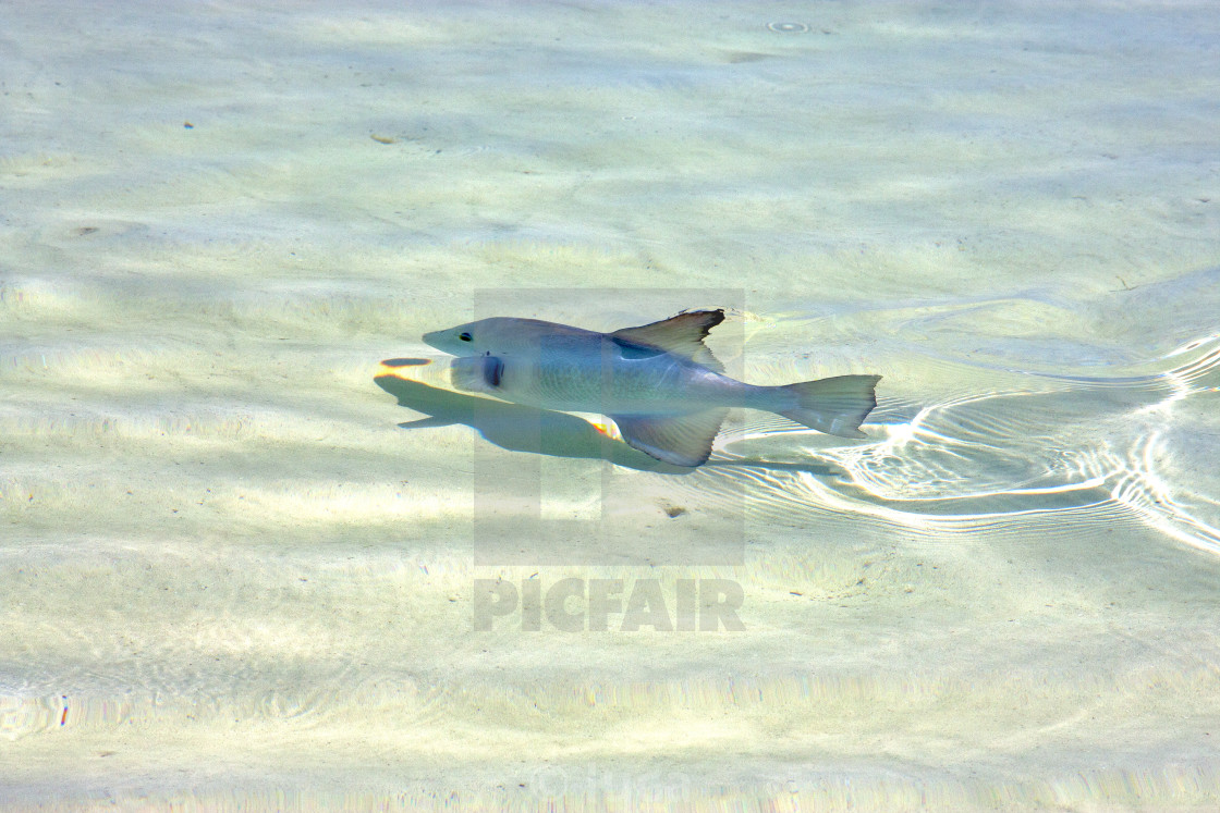 """fish isla contoy mexico drop sunny wave"" stock image"