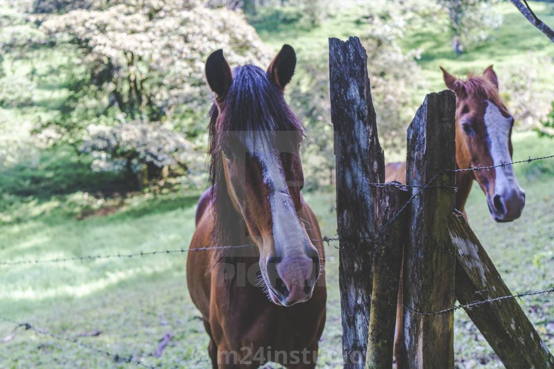 """""""Wild Horses 1"""" stock image"""