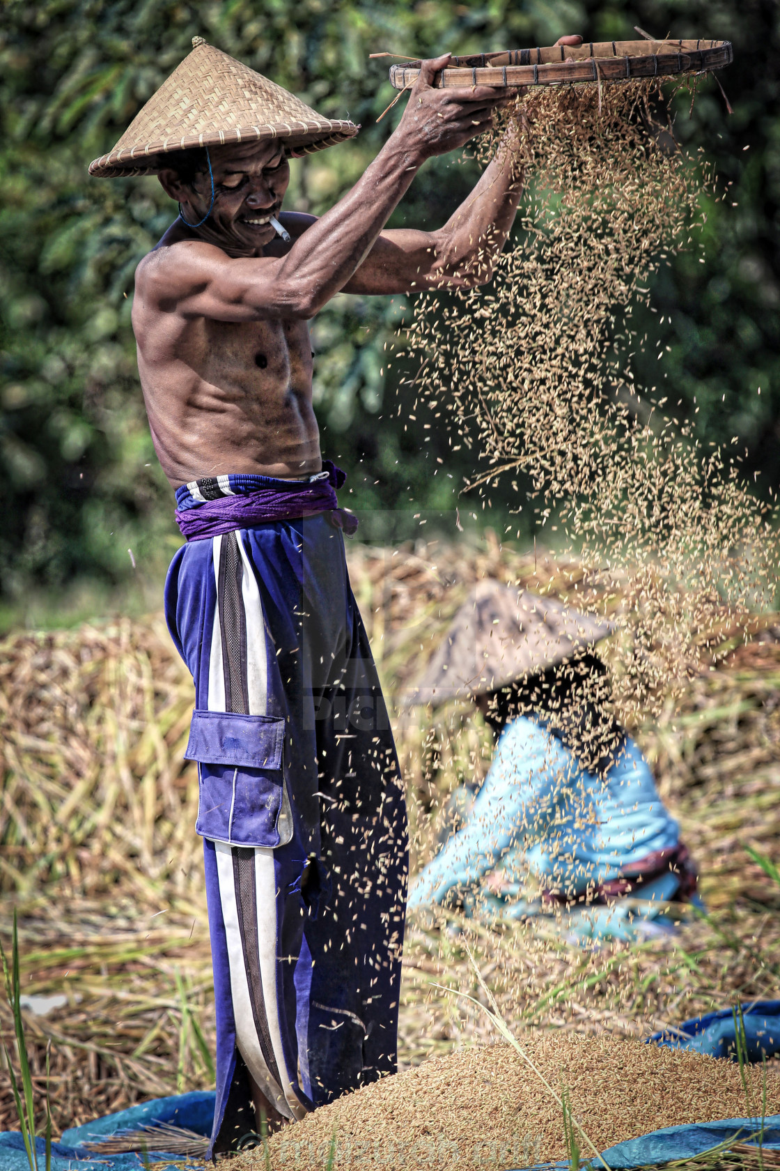 """A male farmer sieving dry soy beans"" stock image"