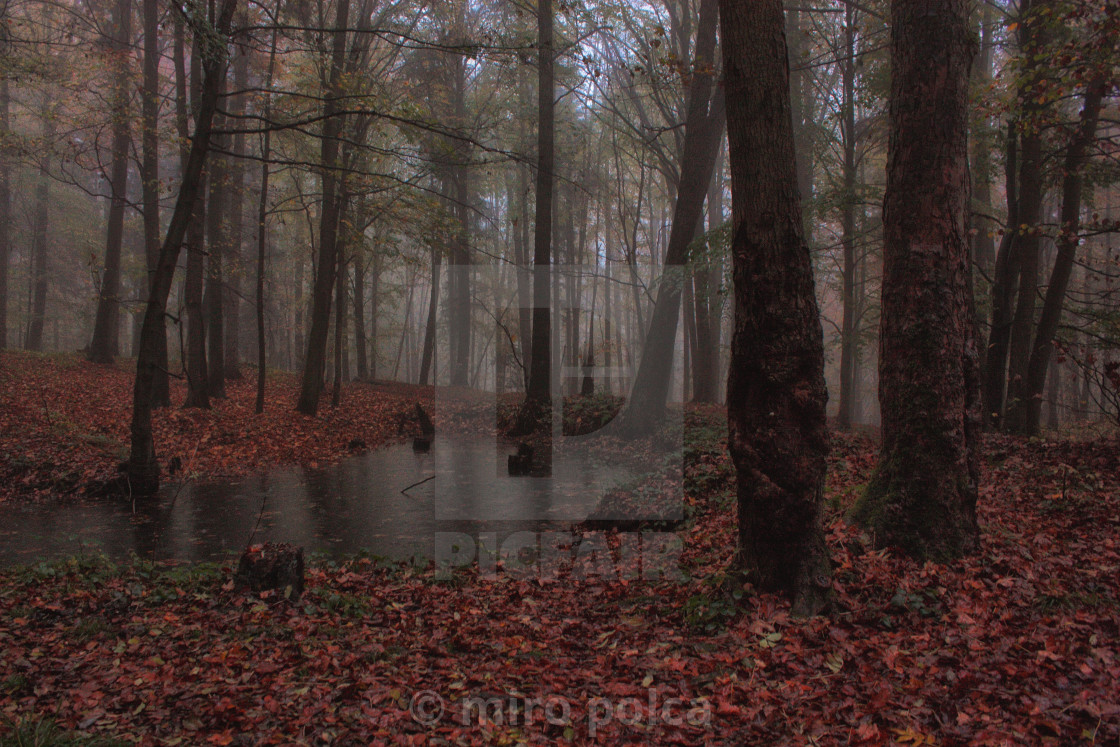 """""""forest swamp"""" stock image"""