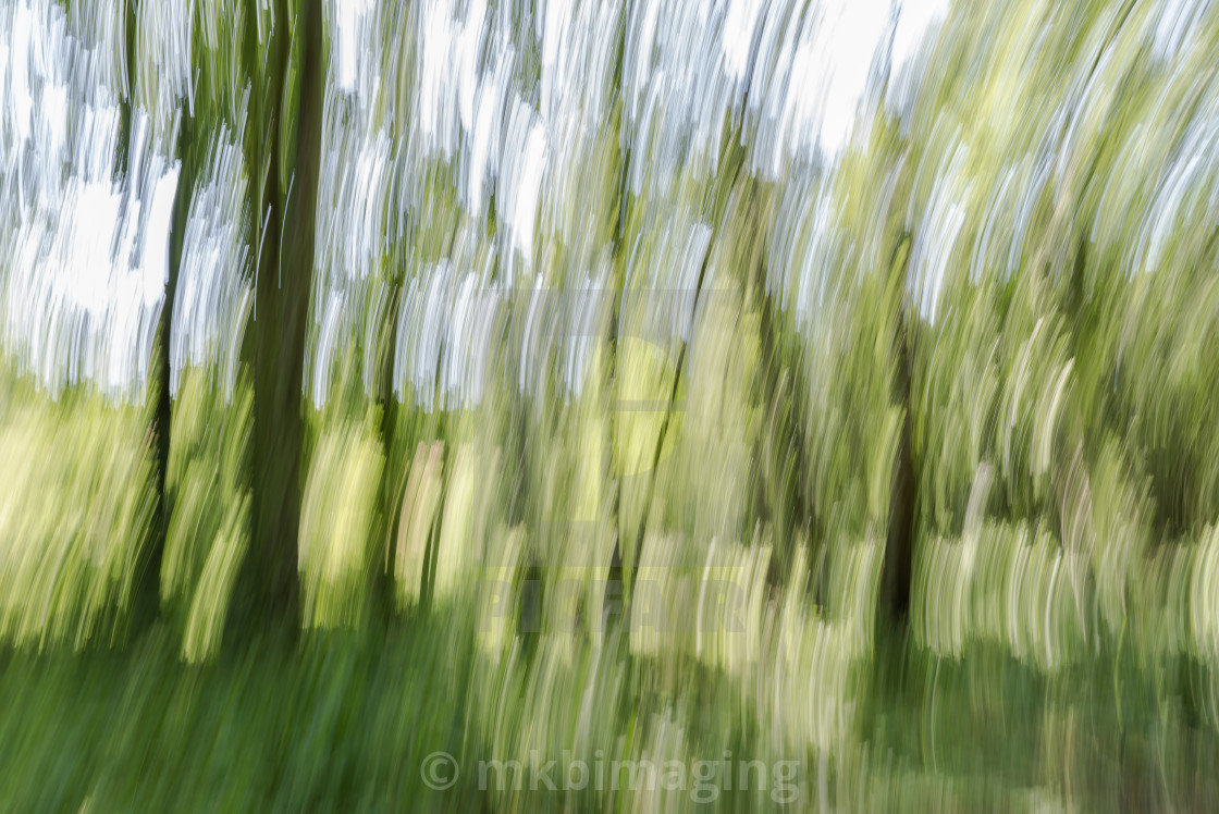"""Trees in Summer (ICM)"" stock image"